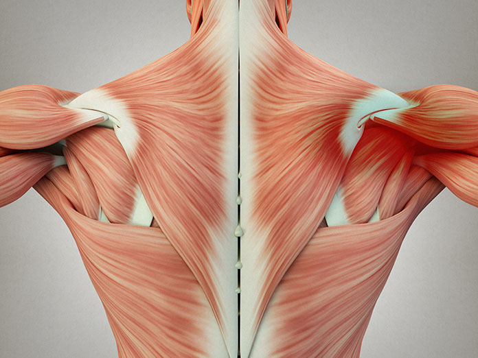 Do You Ever Wonder What Causes Your Muscle Knots?
