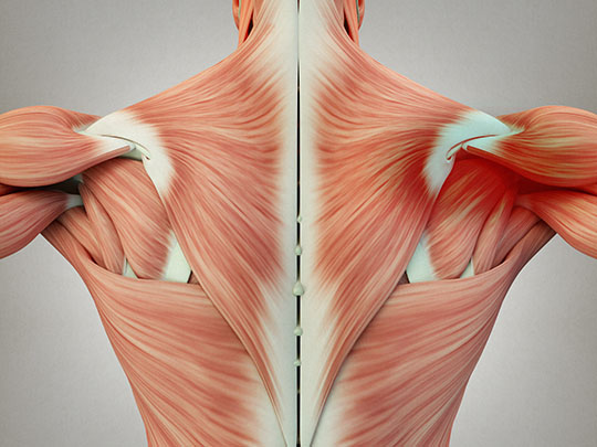 Muscle Knot Relief In Overland Park, KS - Eastern Healing Solutions