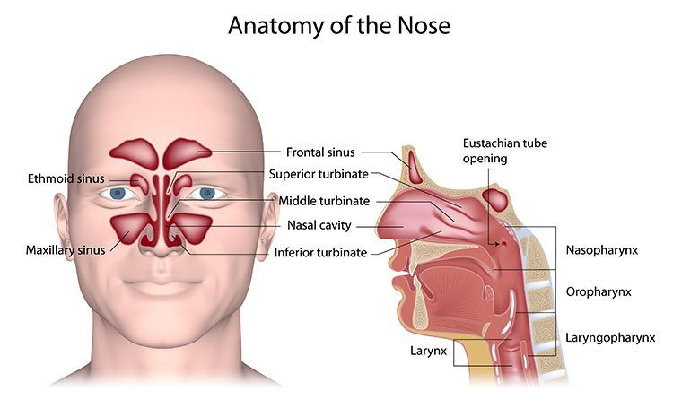 Sinusitis Pressure Relief In Overland Park, KS - Overland Park  Acupuncture Clinic